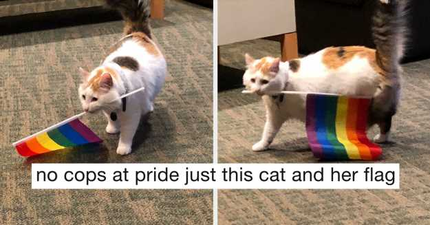 """15 Cat Posts From This Week That'll Make You Say, """"I Need To Adopt A Cat IMMEDIATELY"""""""