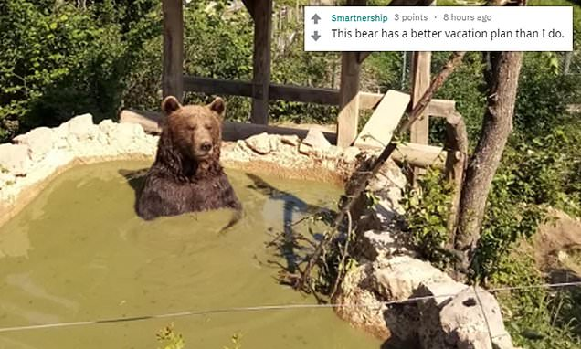 Volunteer shares hilarious snap of a bear 'chillaxing' in a muddy bath