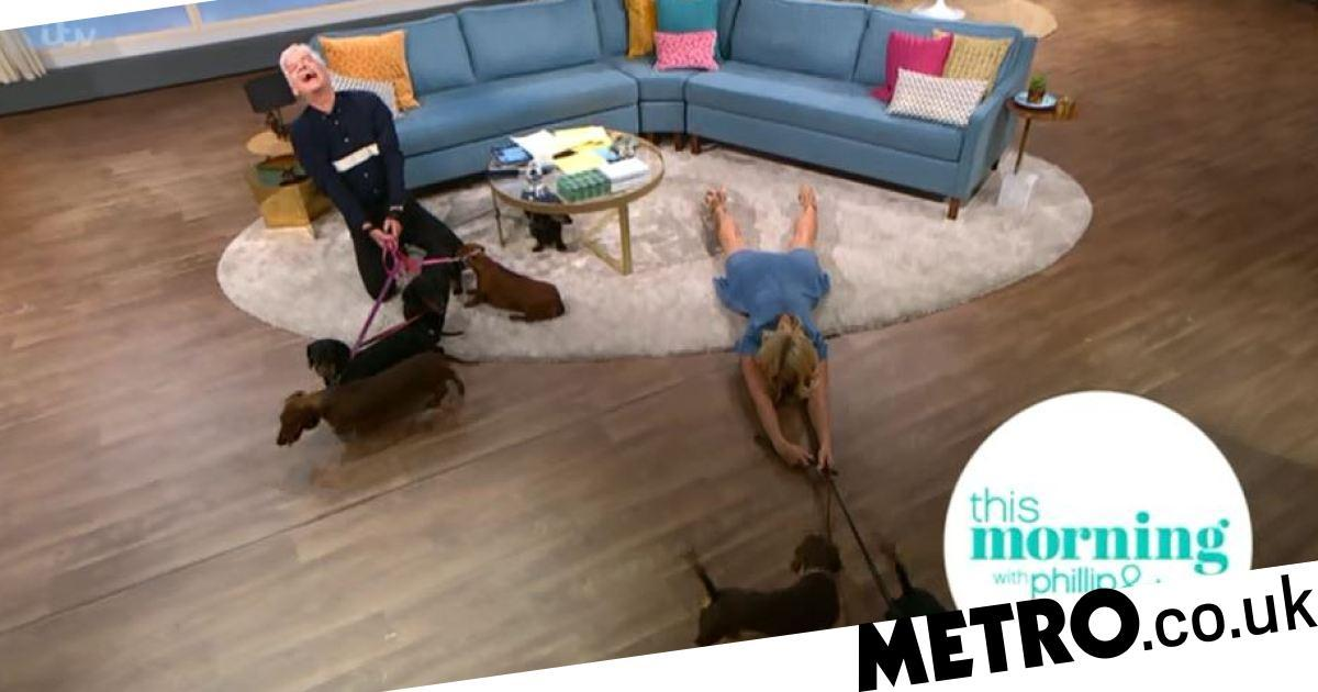 Holly Willoughby left flat out after being dragged across floor by sausage dogs