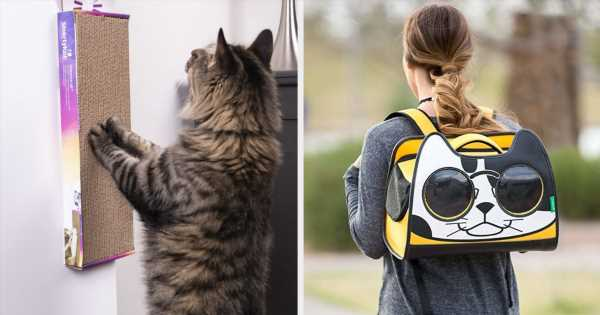 21 Things From Walmart That'll Make Your Cat Purr With Gratitude