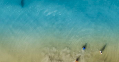 This Dad Captured A Stunning Photo Of A Shark Swimming Right Next To His Kids