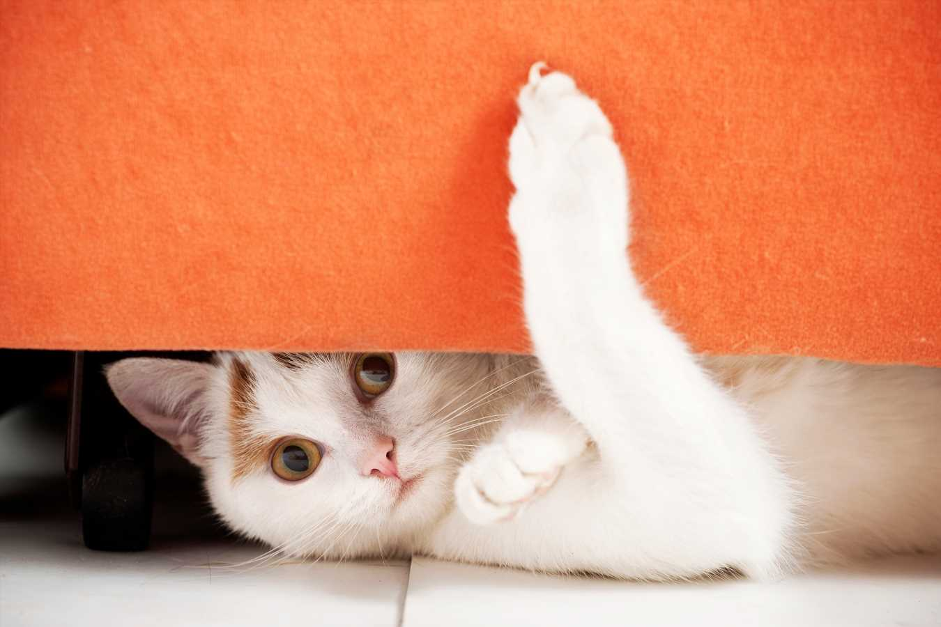 Florida Could Become the Second State to Ban the Declawing of Cats