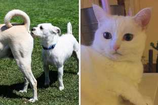 16 Things About Dogs That I, A Cat, Find Completely Depraved