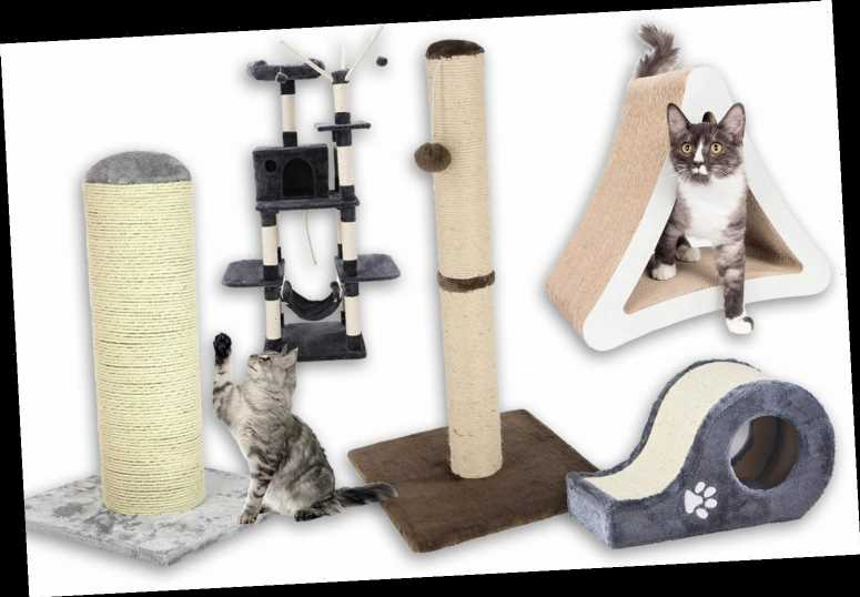 Best Cat Toys 2020.Best Cat Scratching Post 2019 The Sun Uk Newcelebworld Com