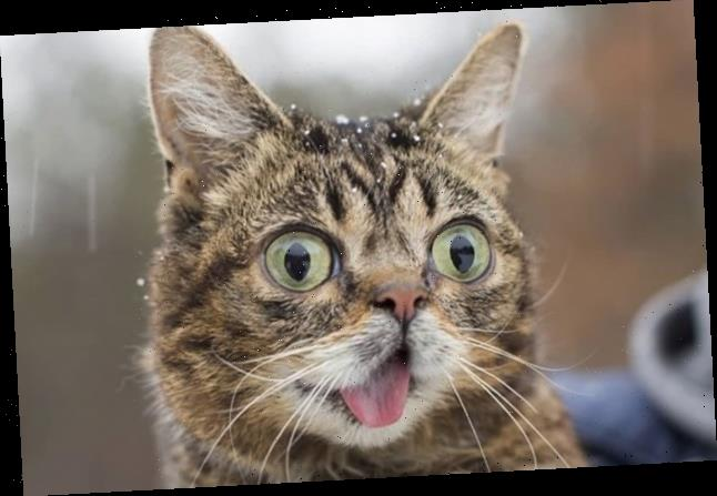 Lil Bub, One Of The Internet's Favorite Cats, Has Died