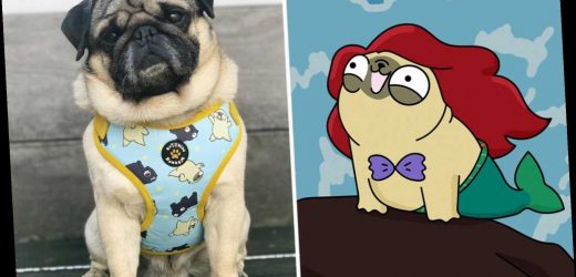 This pug from Queens is a surprising social media star