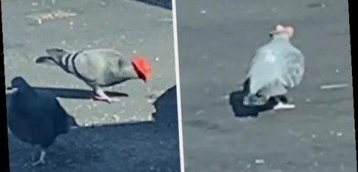 Someone Has Attached Tiny Cowboy Hats To Pigeons In Las Vegas