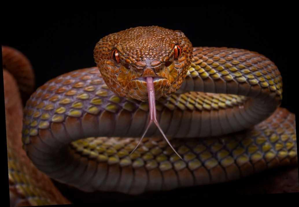'Unluckiest guy in America' bitten on head by venomous snake