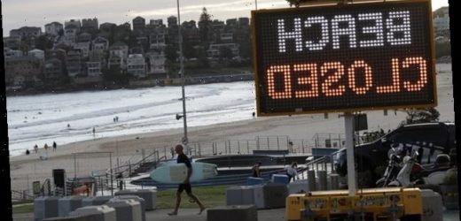 Reopening During Our Pandemic Summer Will Mean More Beach Trips And More Deaths, Experts Say