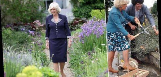 GRIFF RHYS JONES recalls his lifelong love affair with lavender