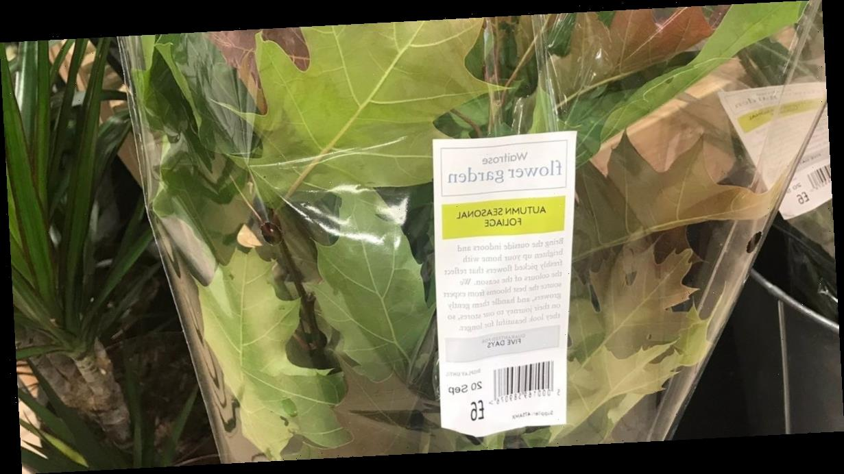 Waitrose mocked for selling £6 autumn leaves as customers can get them for free