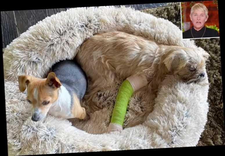 Ellen DeGeneres Reveals Dog Kid Broke His Leg in Accident with Her Other Dog Wally: 'It Was Awful'