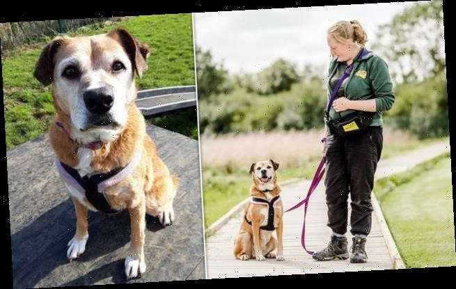 Dog who spent 11 years in kennels is looking for a loving home
