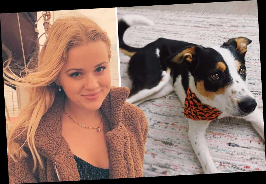 Reese Witherspoon's daughter Ava gets new pup after death of dog Pepper