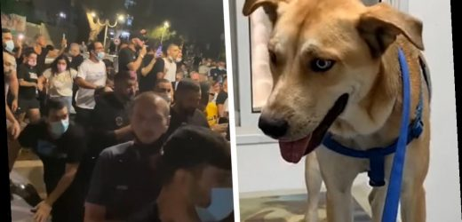 American Man Almost Lynched By Frenzied Mob in Israel After YouTuber Post Videos of Him Allegedly Abusing Dog