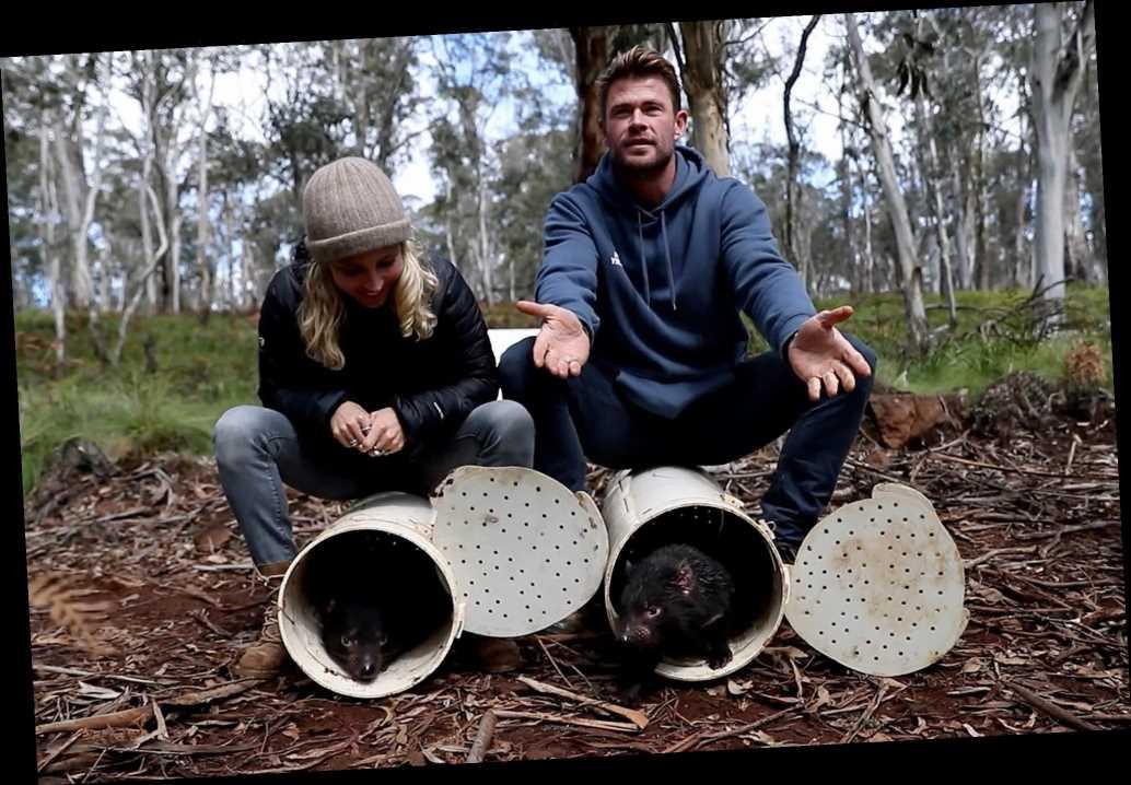 Chris Hemsworth welcomes Tasmanian devils back after 3,000 years