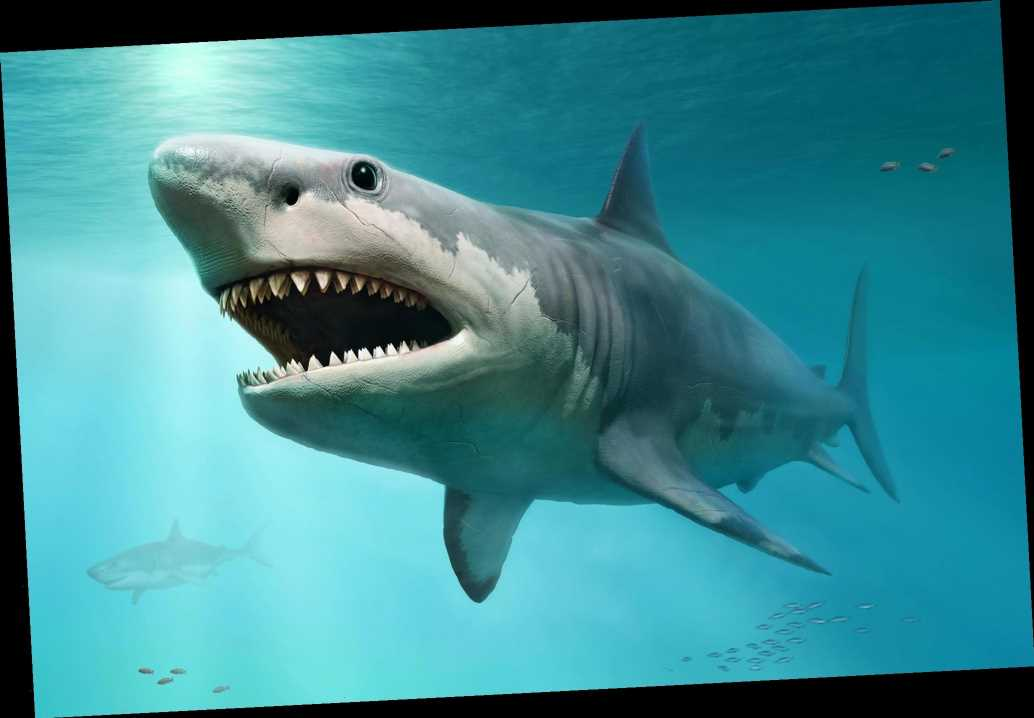 Megalodon fossils discovered all over the world