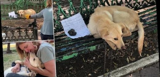Dog abandoned and left with heartfelt note needs forever home