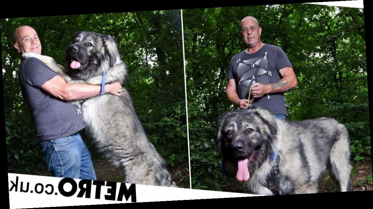 Giant dog is 14 stone and 6ft 5 inches tall – but he hasn't stopped growing yet