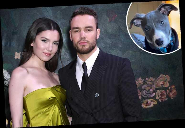 Liam Payne gave fiancee Maya Henry a puppy for Christmas
