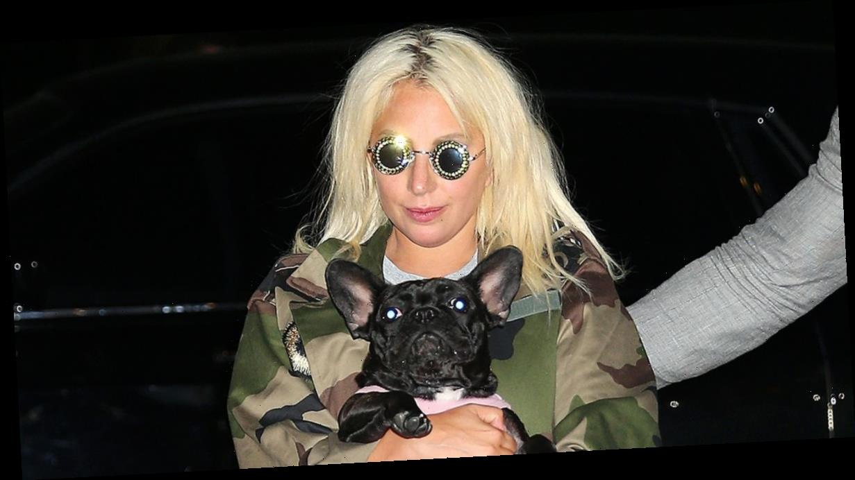 Lady Gaga's two dogs found 'safe and unharmed' after being stolen at gunpoint