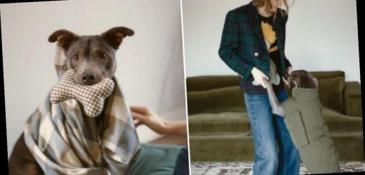 Zara launches cute pet collection for your four legged friend with prices starting from £9.99