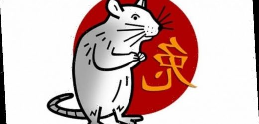 Rat Chinese zodiac sign traits: What it means to be a Rat