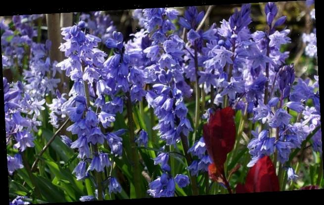 Go wild this spring:Mix delicate wildflowers with showy border plants