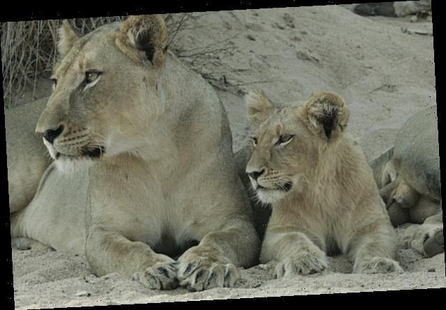 Ratings: Fox's 'Malika the Lion Queen' Has No Roar