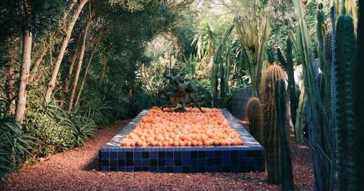 How a Fruit-Filled Garden Inspired a New Wellness Brand