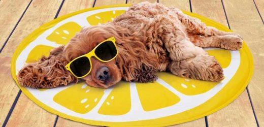B&M's cooling mats for dogs and cats are back and they only cost £5 each
