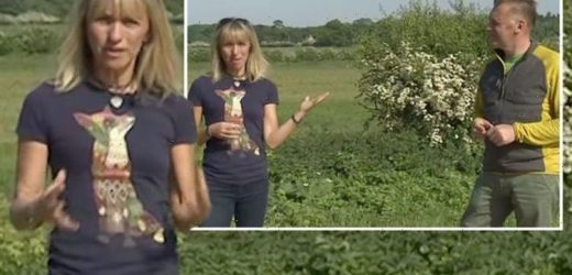 Michaela Strachan addresses 'difficulty' of Springwatch absence: 'I really missed it'