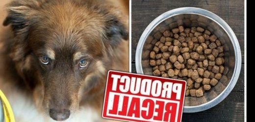 Dog food recalled over salmonella contamination and risk to human health – full list