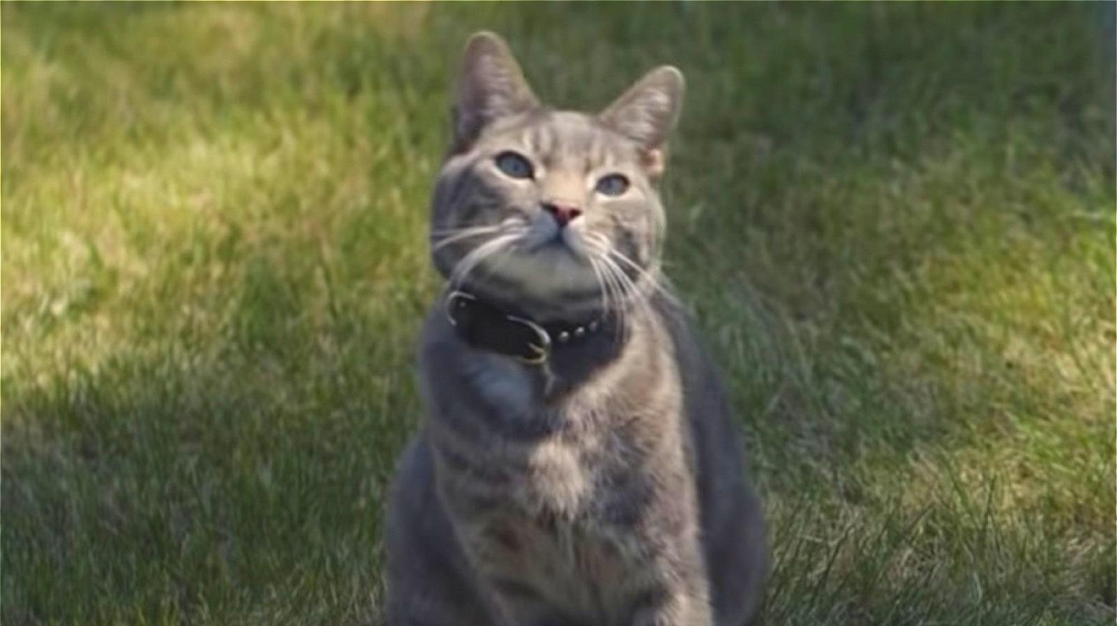 Heres Why Everyones Talking About The Cat In The New Chevy Commercial