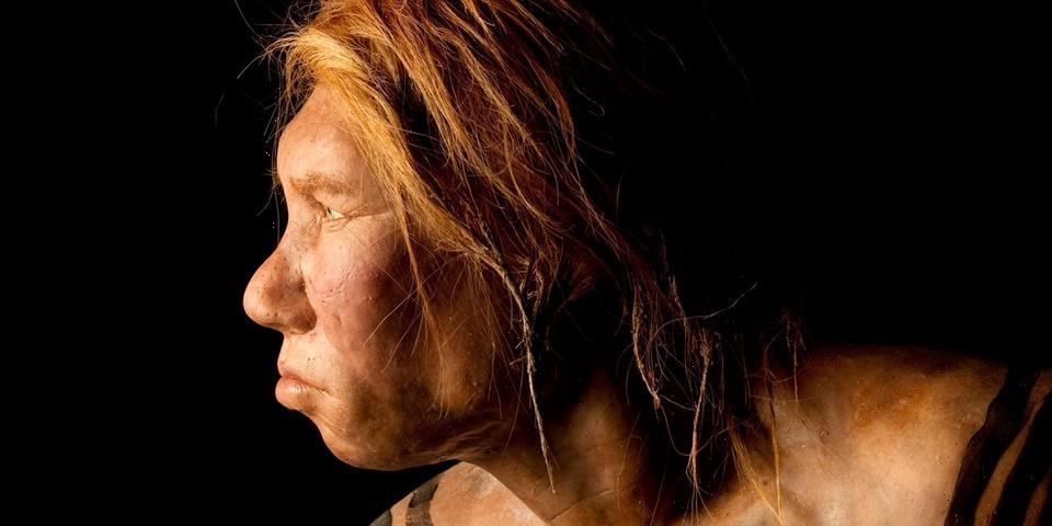Researchers Discover 51,000-Year-Old Neanderthal Artwork on a Prehistoric Deer Bone