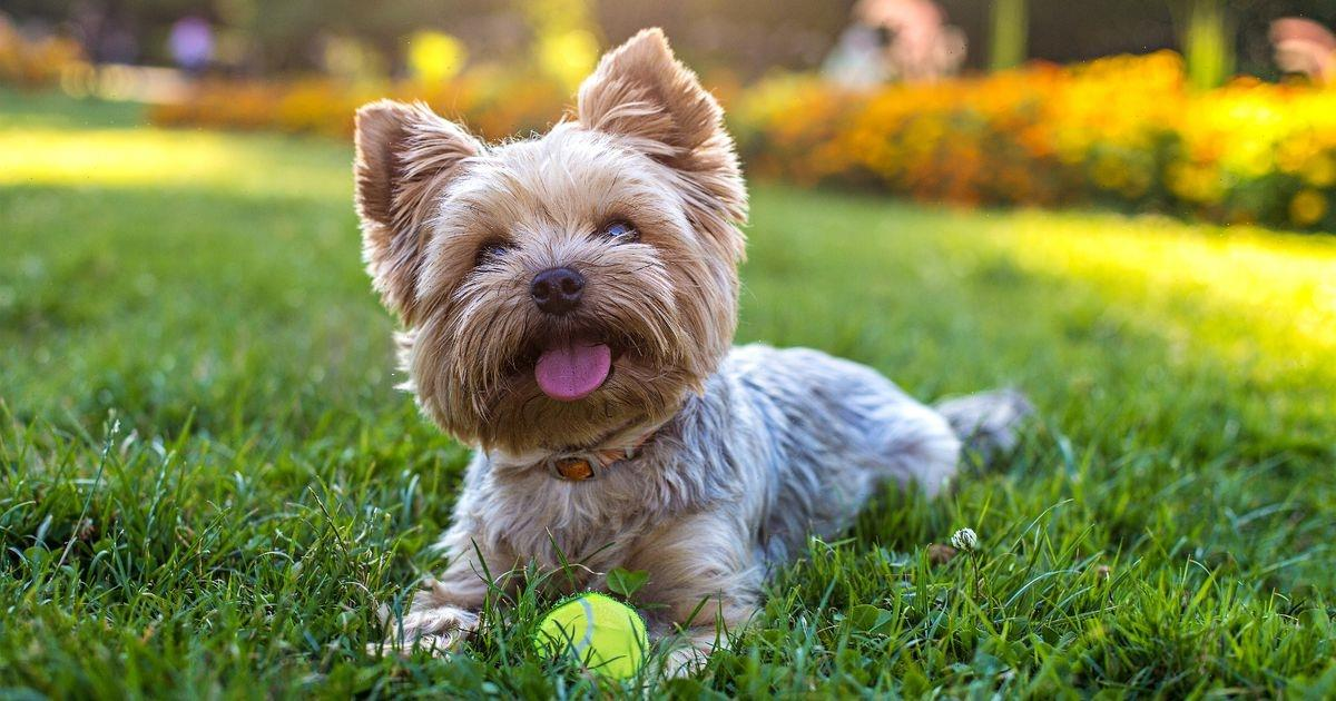 Common plants that could be deadly for your dog – check your garden